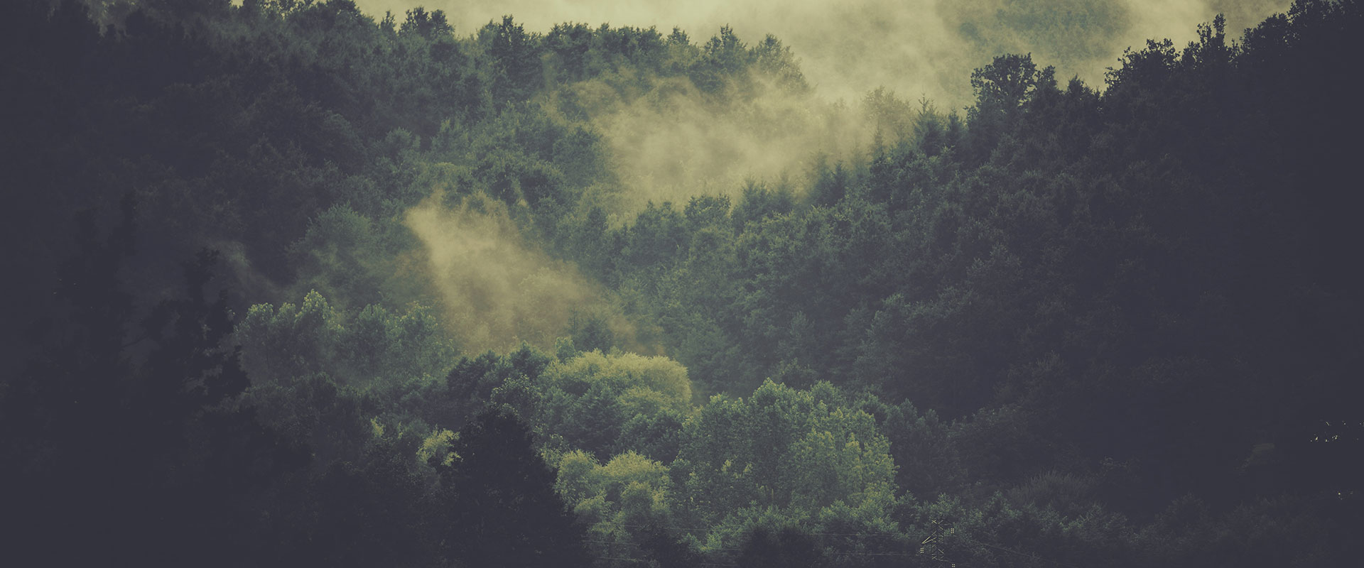 Carbon Forest